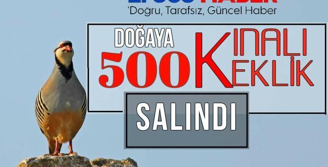 500 kınalı keklik doğal yaşama kanat çırptı